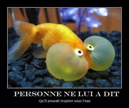 poisson respire sous l'eau