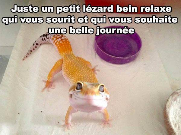 lezard_qui_sourit